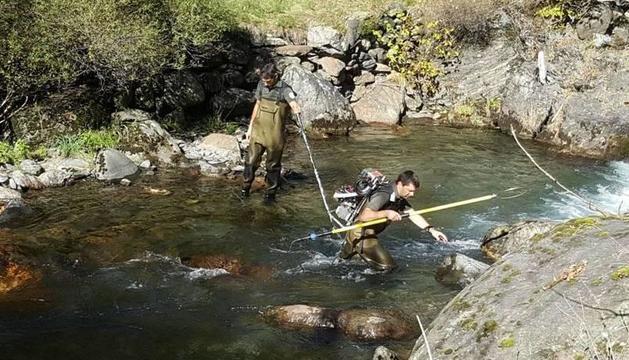 Los agentes de Medio Ambiente pescando trucha autóctona.