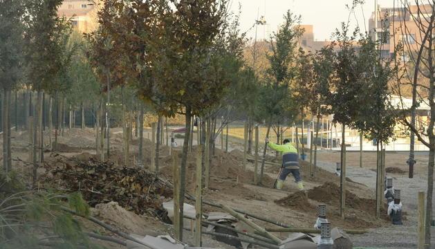 Plantació d'arbres al bosc urbà de Balàfia