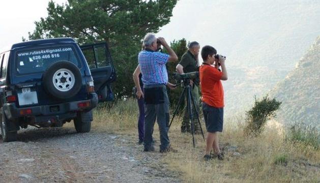 Observadors a Boumort durant la brama d'enguany.
