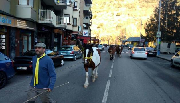 Los caballos con cintas amarillas atravesaron ayer varias poblaciones, en la foto, Sort.