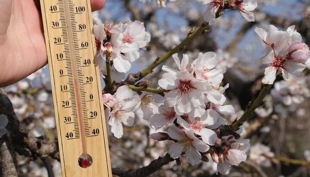 Imagen de almendros en flor en pleno día con temperaturas bajo cero.