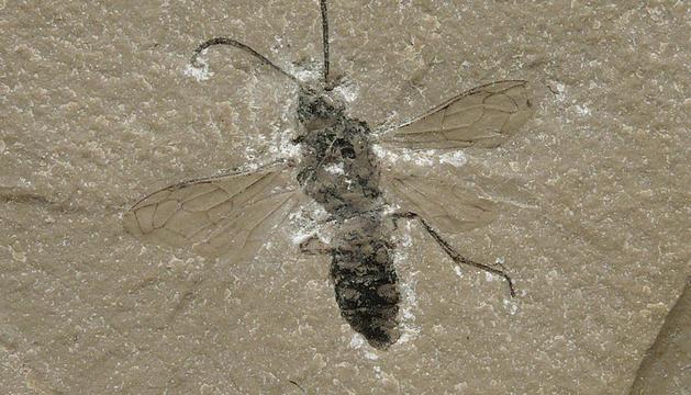 Los fósiles de La Pedrera de Rúbies y La Cabrua de Vilanova de Meià superan los 120 millones de años.