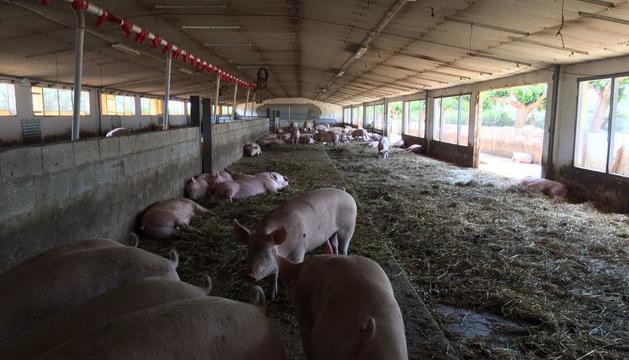 Imatge de la granja de verres en sistema de producció ecològica.