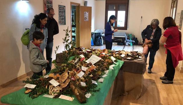La exposición de las setas que encontraron los 50 vecinos que participaron en la excursión.