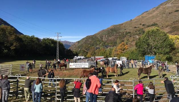 Un centenar de cavalls de la Val d'Aran al concurs de Salardú