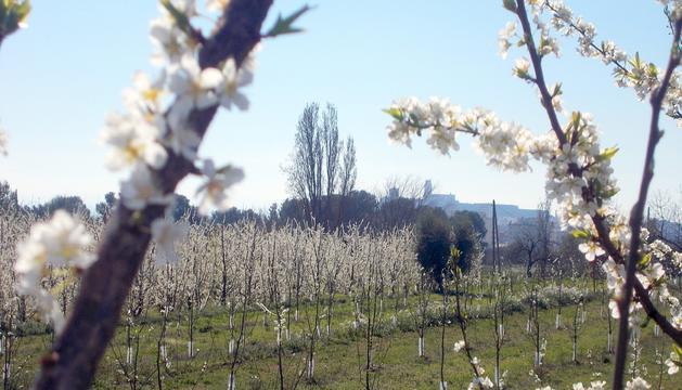 Imatge primaveral de la capital del Segrià.