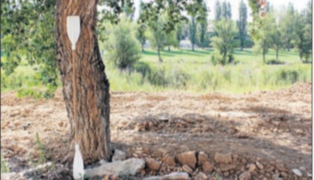 El rem abandonat en un arbre