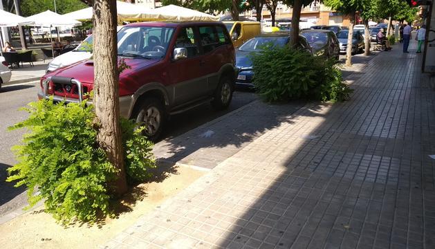 Una imagen de principios del mes de junio, en el Clot de les Granotes