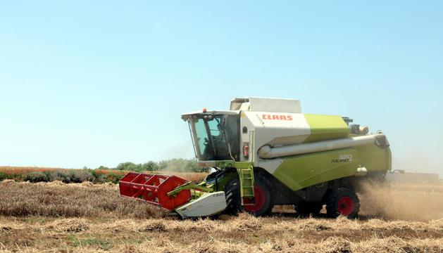 Imagen de una cosechadora trabajando en una finca en Alfés.