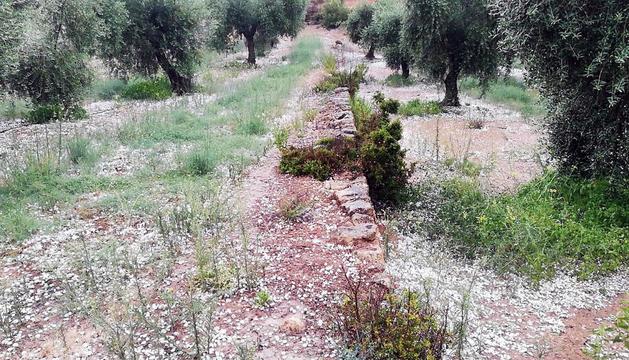 Las granizadas del sábado por la tarde afectan a 4.170 hectáreas de cultivo, principalmente en el Urgell y Les Garrigues