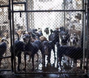Vista d'uns gossos.