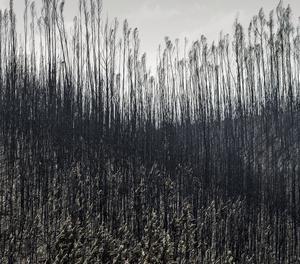 L'incendi declarat al paratge La Peñuela de Moguer (Huelva) ha entrat a l'Espai Natural de Doñana.