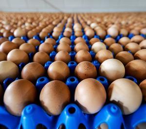 Una capsa d'ous