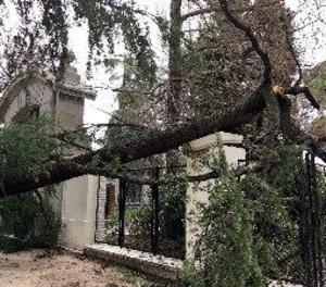 Un nen mor en el Retiro després de caure-li a sobre un arbre a causa del vent