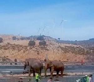 Tallada l'A-30 per un accident d'un camió amb elefants que estan en la via