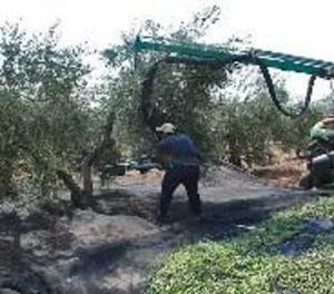 Patenten una recol·lectora que agita alhora tronc i branques per recollir els fruits