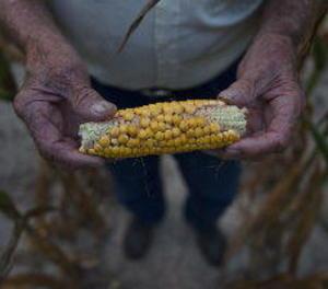 Els preus agrícoles seguiran baixos la pròxima dècada, segons l'OCDE i la FAO