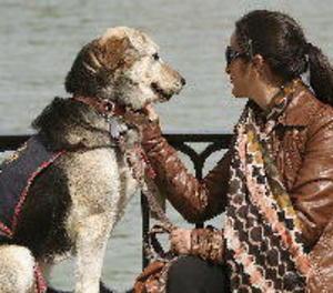 Una associació catalana rescata gossos porucs abandonats a tot Espanya