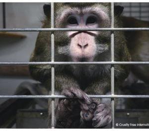 Madrid suspèn l'activitat de Vivotecnia després de veure indicis de maltractament animal