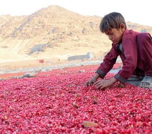 La covid augmenta el treball infantil i allunya la meta d'erradicar-lo el 2025