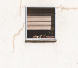 Un gat encén l'equip de música i molesta de nit els veïns