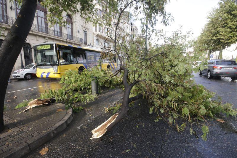 Pluges de deu litres en 20 minuts fan caure arbres i inunden carrers.