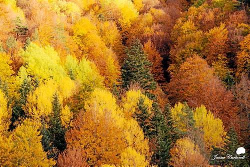 La boira, les fulles que cauen... la tardor és una estació molt fotogènica.