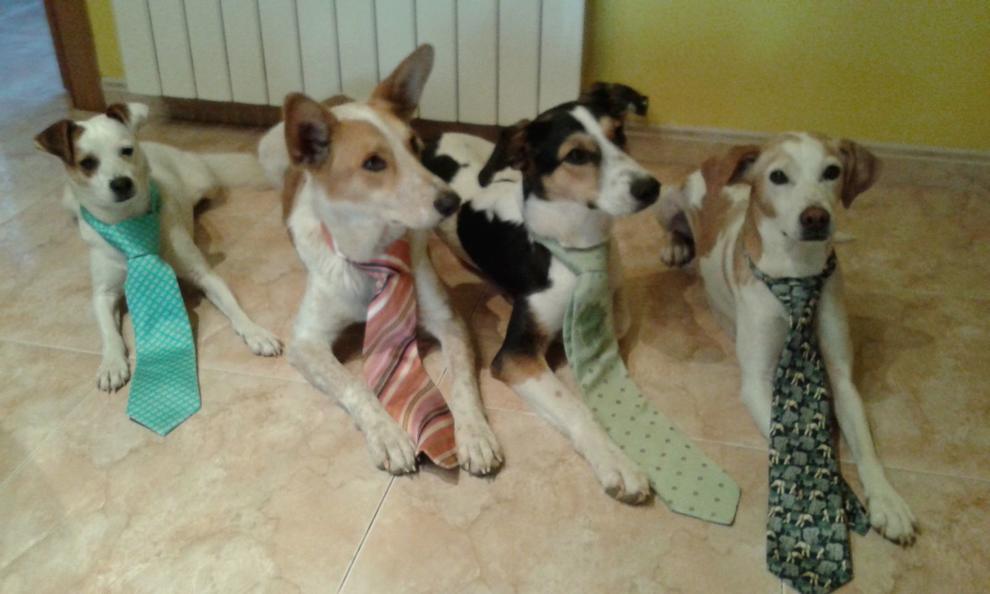 Gossos, gats, canaris, iguanes,...presenta'ns a la teva mascota!