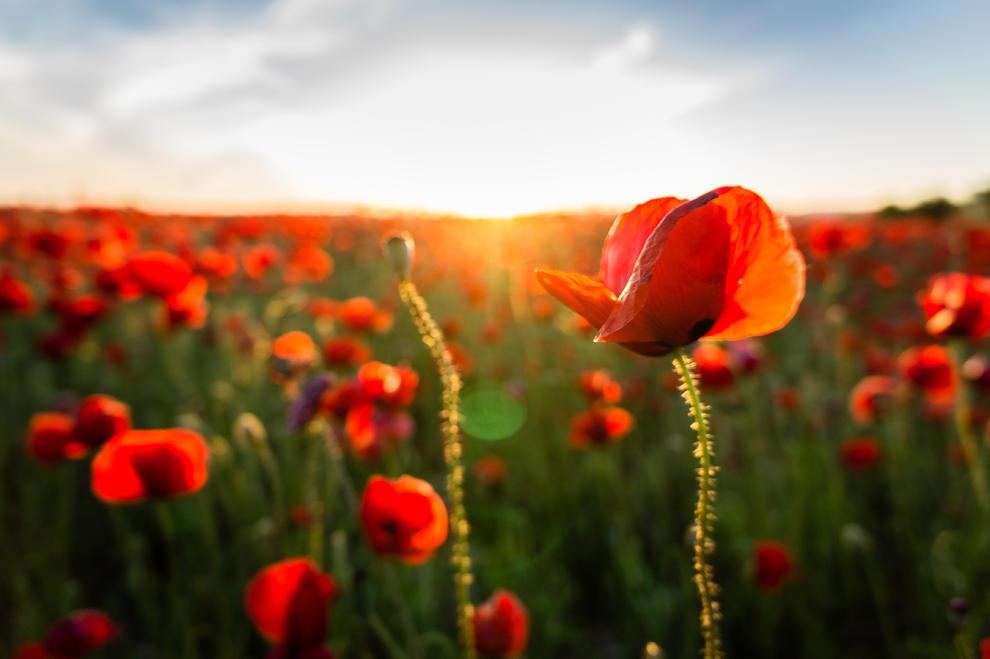 Arbres florits, camps verds i bon temps...ja és aquí a primavera!