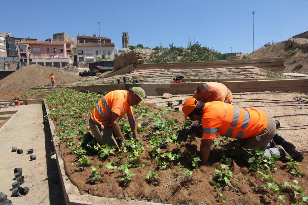 Imatges de la instal·lació de plantes a les obres del Call Jueu de Lleida