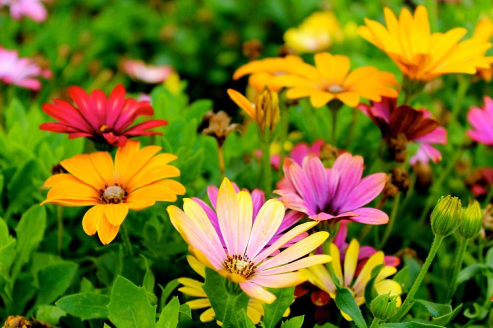 Jardins, balcons, terrasses, horts o racons amb plantes.