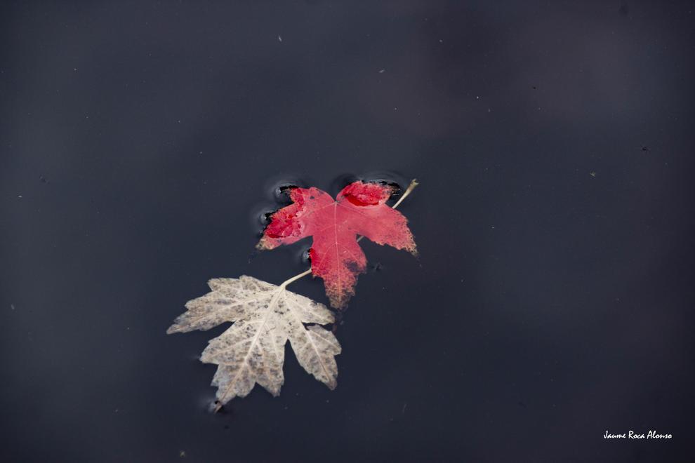 Les fulles cauen, arriba la boira i comença a fer fred.