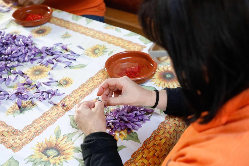 L'Albagés recull el safrà amb un increment del 20% de la producció