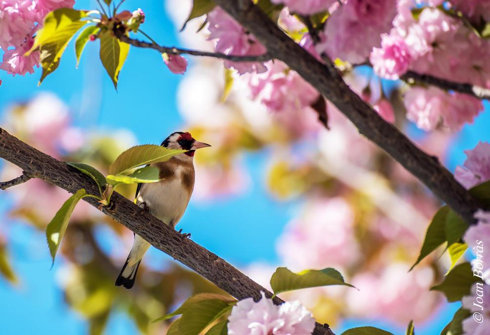 Arbres florits, camps verds i bon temps...ja és aquí la primavera!