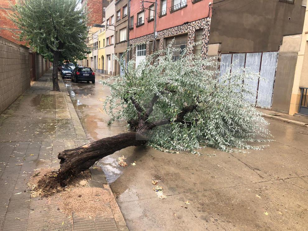 Tiró árboles e inundó calles y campos.